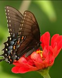 Butterfly | 128*160