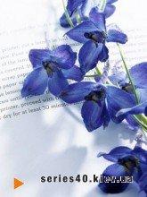 Blue flover | 240*320