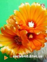 Цветы | 240*320