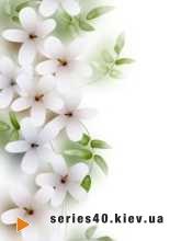 Flowers   240*320