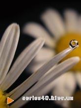Flowers by Giorgio2 | 240*320