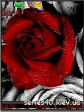 Rose by _DK_SAN_   240*320