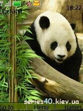 Panda by _DK_SAN_ | 240*320