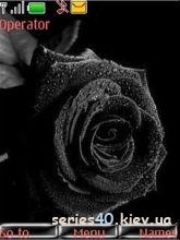Black rose by VOVAN_234 | 240*320