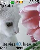 CAT | 128*160
