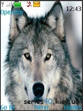 World of Wolfs by Vice Wolf | 240*320