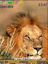 Lion by _DK_SAN_ | 240*320