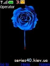 Blue Rose   240*320