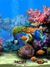 Aquarium | 240*320