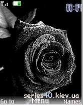 Black Rose   240*320