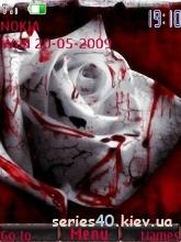 Blood Rose by Richard   240*320
