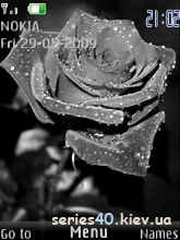 Dark Rose by Richard | 240*320