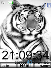 White tiger & swf white tiger  | 240*320