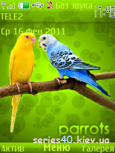 Parrots by Walk | 240*320
