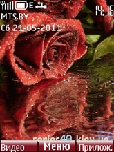 Red Rose by antropov | 240*320