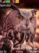 Owl by gdbd98 | 240*320