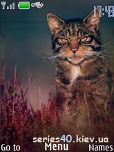 Cat By Sinedd | 240*320