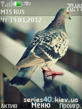Bird by gdbd | 240x320