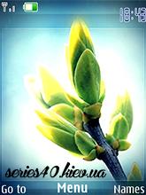 Spring Bud by KoB6aCa & Leo | 240*320